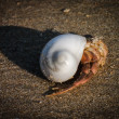 A Crab and a shell on the Beach in Goa, India, 2012 — Stock Photo
