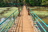 Pont solitaire en Inde (Plantation d'épices) — Photo