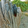Stock Photo: Black Beetle on Tree