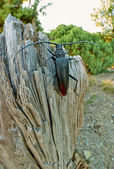 Black Beetle on the Tree — Stock Photo