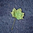 Stock Photo: Maple leaf on tarmac road