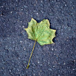 Maple leaf on tarmac road — Stock Photo