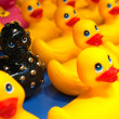 Different black rubber duck amongst yellow ducks - Stock Photo