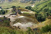 Rice Terraces, Sa Pa, Vietnam — Stock Photo