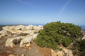 Akamas Peninsula, Cyprus, Europe — Stock Photo