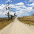 Dirt road, Tasmania, Australia — Stock Photo #30573035