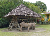 Donkey, Cane Mill, Saint Lucia — Stock Photo