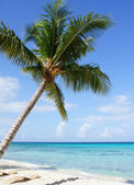 Caribbean Beach, Dominican Republic — Stock Photo