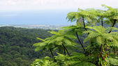 Rainforest, Guadeloupe, Caribbean — Stock Photo