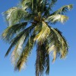 Palm Tree, Caribbean — Stock Photo #40465273