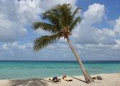 Caribbean Beach, Dominican Republic — Стоковое фото