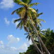 Stock Photo: CaribbeBeach, DominicRepublic