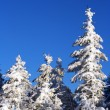 Stock Photo: Christmas tree in the snow.