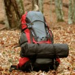 Backpack in the leaves. — Stock Photo