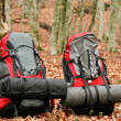 Backpacks in the leaves. - Stock Photo