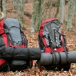 Backpacks in the leaves. — Stockfoto