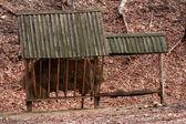 фидер для оленей, — Стоковое фото