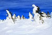 美丽的冬天风景与雪覆盖的树木 — 图库照片