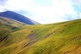 Carpathian mountains, Ukraine. — Stock Photo
