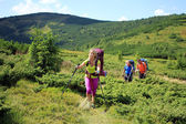 Summer trekking in the Carpathians. — Stock Photo