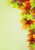 Zelené pozadí s listím — Stock fotografie