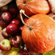 Stock Photo: Rich autumn harvest