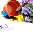 Floral background with violet — Stock Photo