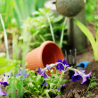 Petunia flowers on garden bed — Stock Photo #14617489