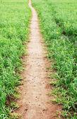 Footpath across the field — Stock Photo