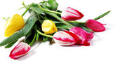 Background with tulips bouquet — Stock Photo