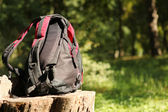 Tourist backpack on the stump — Stock Photo