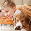 Beagle puppy lying in bed with boy - Stock Photo