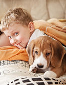 Beagle puppy lying in bed with boy — Stockfoto