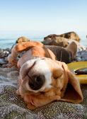Om te zonnebaden hond portret — Stockfoto