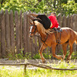 A skilled horse rider — Stock Photo