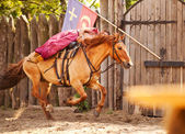 A skilled horse rider shows a risk trick — Stok fotoğraf