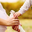 Mother and son hands with white dove — Stock Photo
