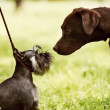 Stockfoto: Big and little dogs rendezvous