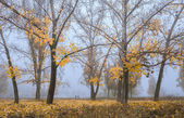 Warm Fall : Morning fog — Stock Photo