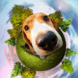 Beagle puppy fun portrait — Stock Photo