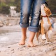Puppy beagle running near it owner legs — Stock Photo #38762675