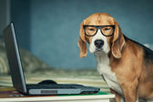 Dog in glasses — Stock Photo