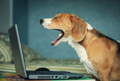Yawning dog — Stockfoto