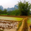 Rice plantation in China - Photo