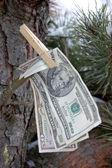 Notas de dólar — Foto Stock