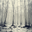 Birch trees in fog — Stockfoto