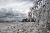 Giorno d'inverno — Foto Stock
