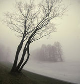 Trees in fog-1 — Stock Photo