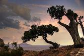 Suché stromy — Stock fotografie