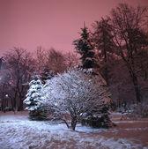снежный зимний парк ночью — Стоковое фото